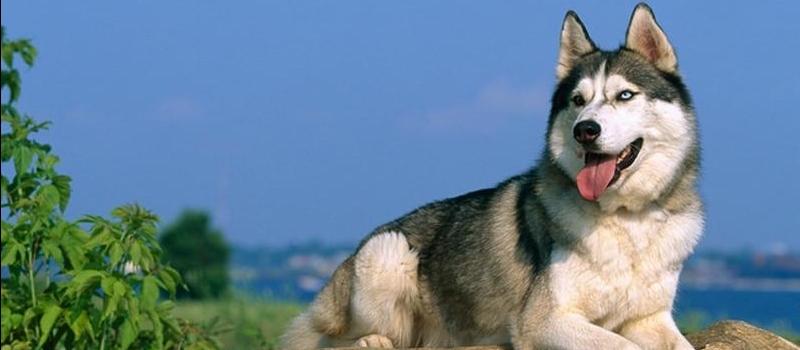 狗狗得寄生蟲癥狀