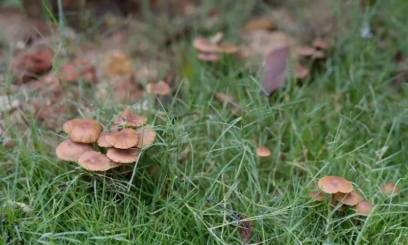 千万别吃!一男子采食路边的蘑菇,头晕腹泻进医院。。雨后尤其多!