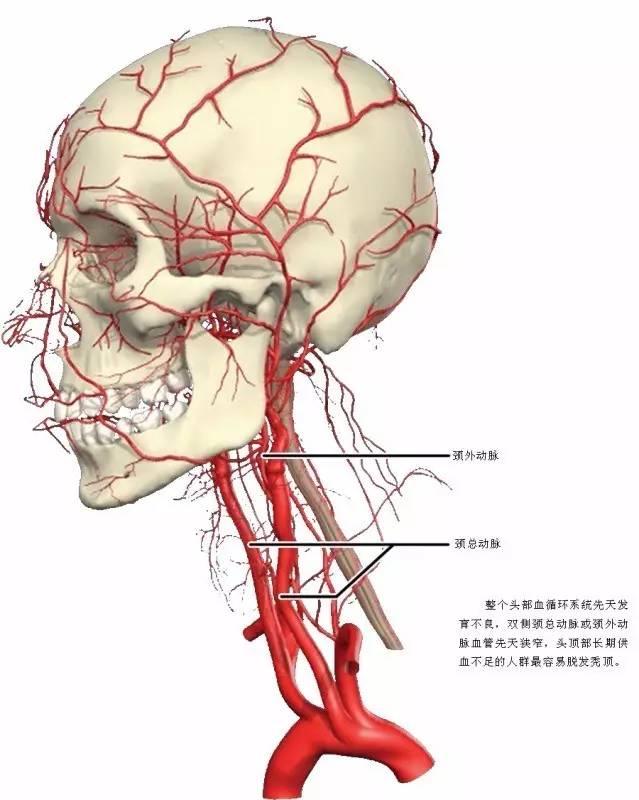 超清3D血管解剖图集
