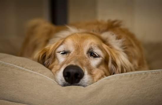 狗狗吐黄水的6种环境,你可以这样做