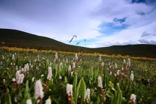 比红原辽阔,比若尔盖原始!四川最迷人的草原,竟然是它!