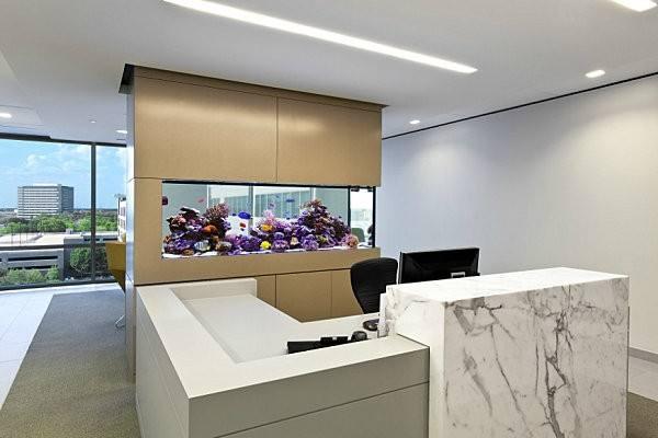 """长沙办公室鱼缸鱼缸入缸前的注意事项"""""""