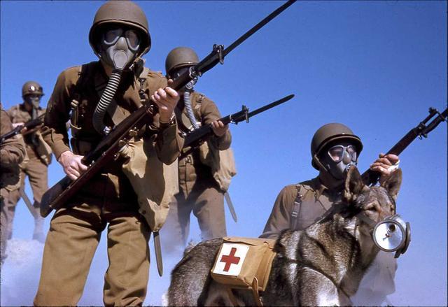 不要笑请不要笑!小狗战士戴上防毒面具后的样子十分滑稽