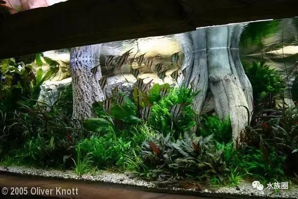 德国 造景师 Oliver Knott 作品欣赏