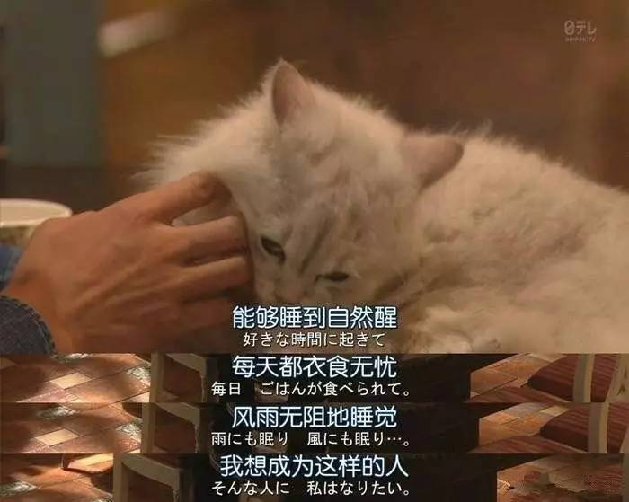 红黑榜   曲妖精扑街穿错上黑榜,刘涛、倪妮真心美到昏厥!