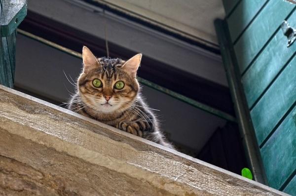 猫糖尿病早期什么症状图片