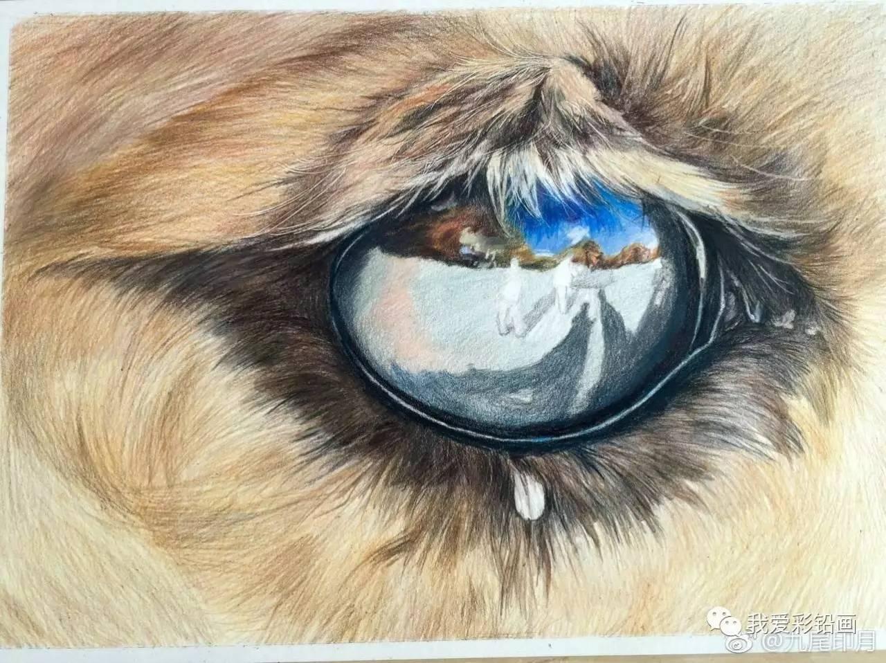 骆驼有几层眼睫�_彩铅手绘骆驼眼睛~~逼真如照片!