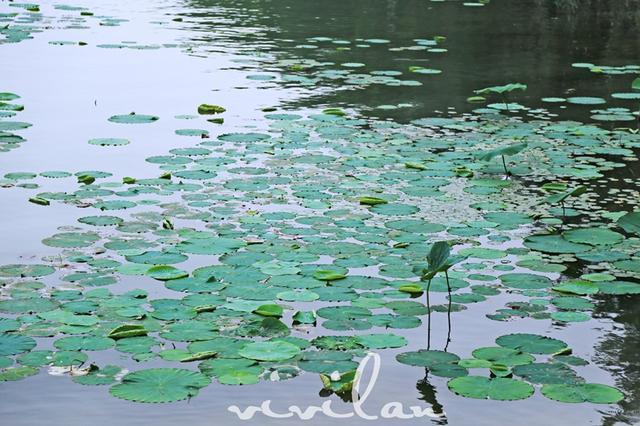 纯粹自然生命湖畔悠享度假新风尚