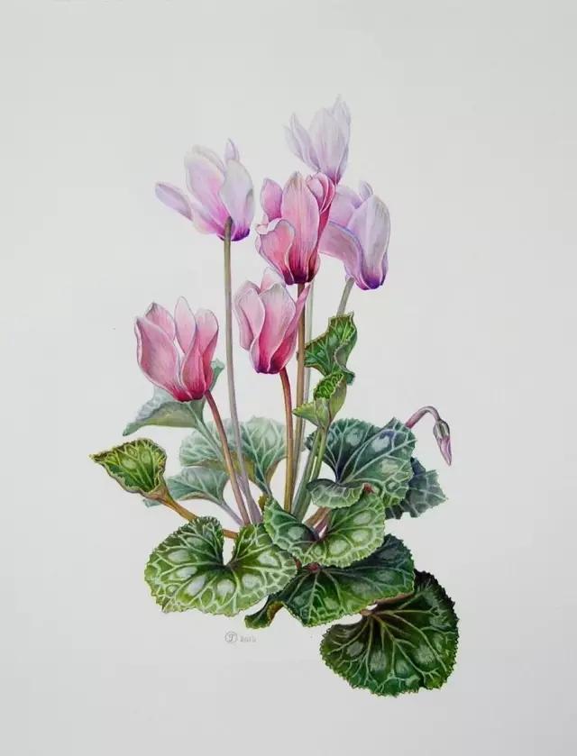 俄罗斯女画家-gudzera olga 彩铅花卉作品欣赏图片