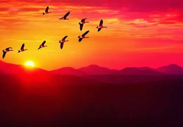 口琴 远飞的大雁 ,送给那个年代的知青