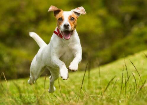 """教你如何为狗狗定制合理的运动量"""""""