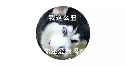 微玉屏小编是条狗