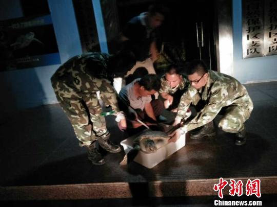 珍稀濒危绿海龟被渔网缠住 在惠