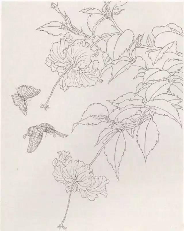 程 工笔蝴蝶的画法步骤 工笔画蝴蝶白描图片上色步骤图片