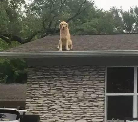 """狗狗爱去屋顶放哨?这位贴心的主人给它建了个瞭望台"""""""