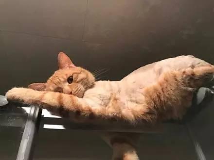 """网友家猫咪喜欢监督她洗澡,而且最后还"""""""