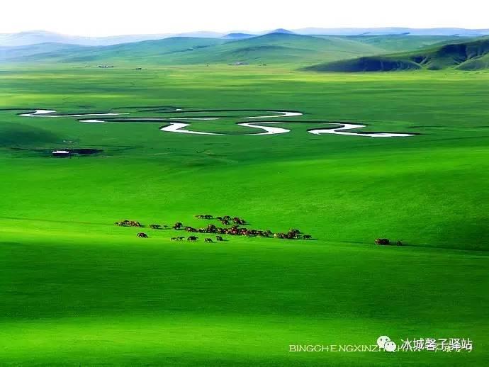 """呼伦贝尔大草原最美的季节到了,去圆你的草原梦吧!"""""""