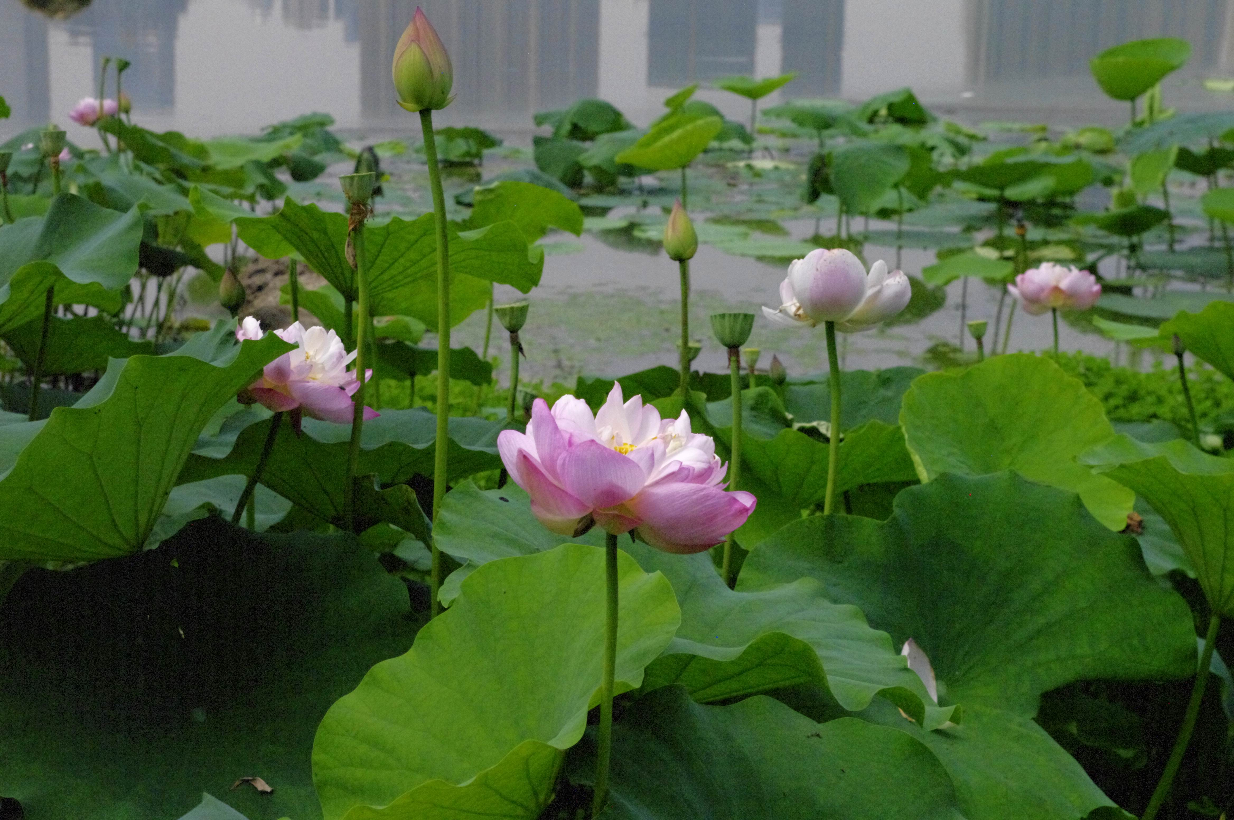武汉夏日的六种生活提案