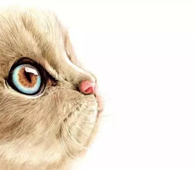 教程  教你用彩铅画一只萌猫,是你想要的吗?