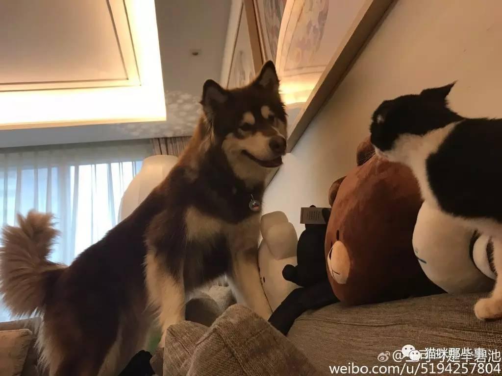 王思聪爆料战狼2还找过林更新林狗拒绝理由很奇葩