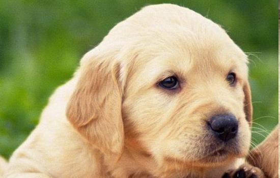 宠物狗的喂养方法,新手养犬攻略