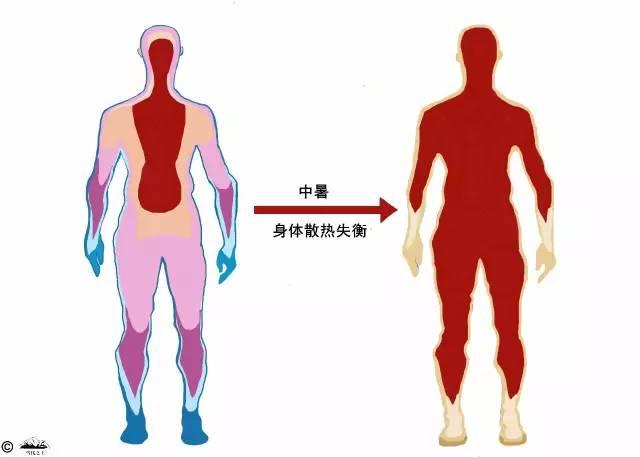 人体温度_一方面,运动产生大量热量,导致人体发动机温度陡然上升.