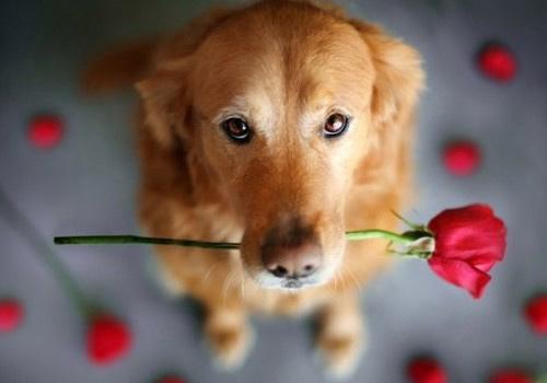 狗狗不小心吃到辣椒了,狗狗能吃辛辣食物吗?