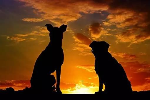 狗狗训练:如何让狗狗定点方便?