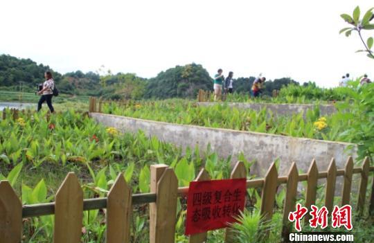 【共舞长江经济带】贵州贵阳:以法制为保障 创新生态治理(组图)