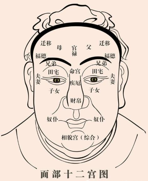 为何人脸叫五官?五官都是管什么的?图片