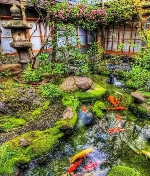 7个别墅庭院式鱼池水草花木v别墅搭配深圳别墅水岸新都图片