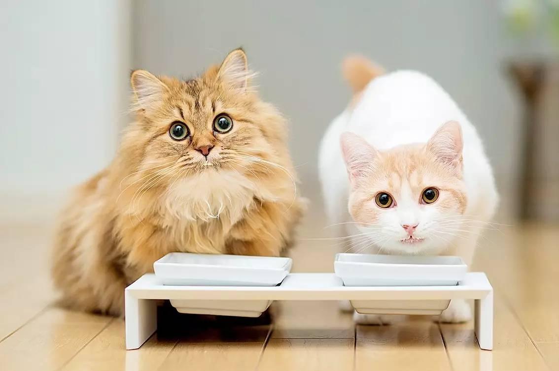 壁纸 动物 猫 猫咪 小猫 桌面 1134_754