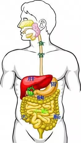 人体的肚子内部结构�_女性特有的器官在下腹部的位置 人体肚子可以划分为9个区:1右上腹,2