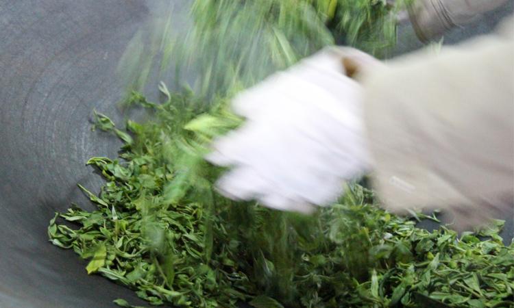 杀青是制作普洱茶中最难最伤劳力的重要环节之一