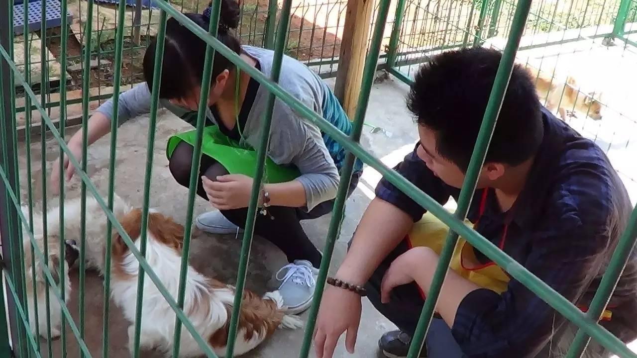 北京猛禽救助中心守护18年 救助了五千多只猛禽