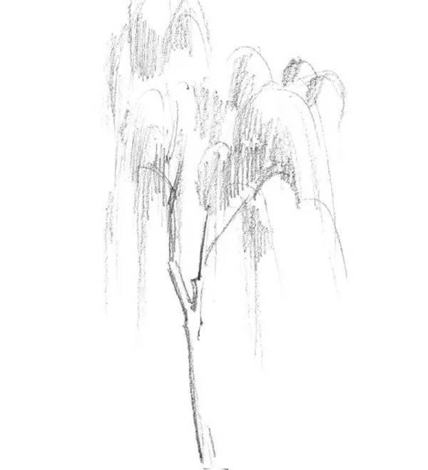 素描垂柳的绘画技法 就是这么简单图片