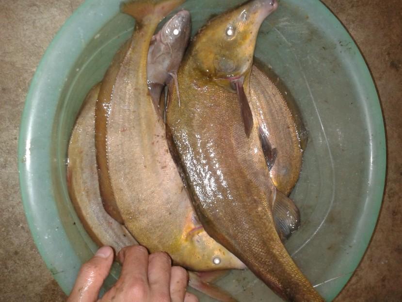 这里的鱼多得没人钓,被它们奇怪的外表所吸引
