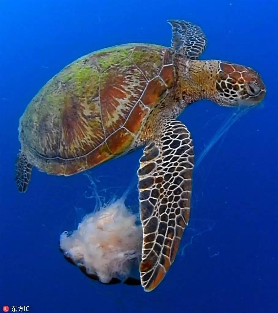 一周木屑趣事丨集锦嘴撕狮鬃仓鼠,北极熊热到没羞没臊水母笼怎么换海龟图片