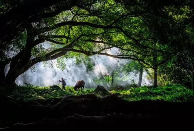隐匿于深山老林里的秘境图片