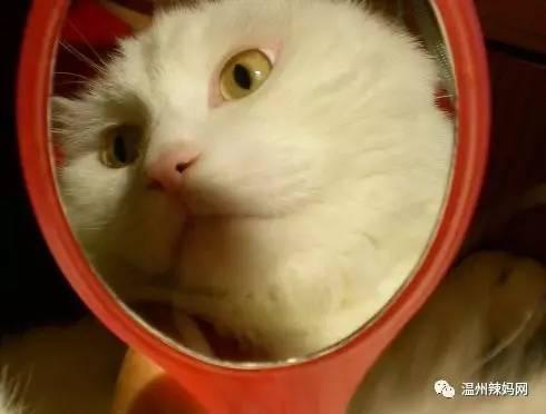 小花猫照镜子啦
