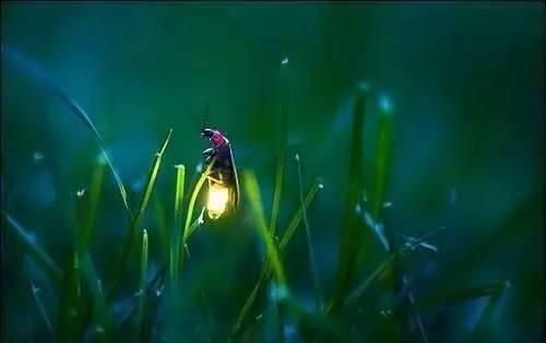 萤火虫进家里寓意好吗