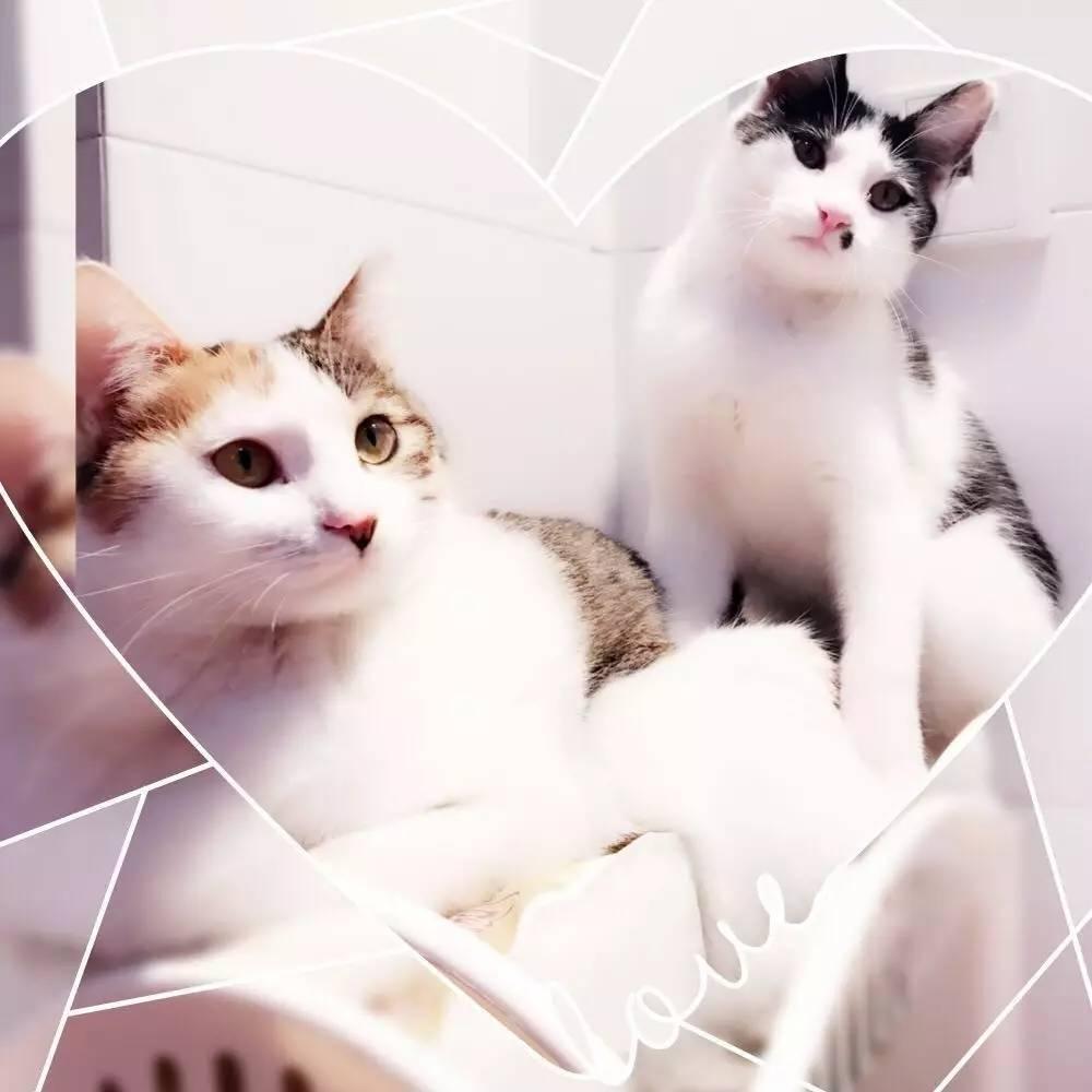 无码高清qvod_没事,不要难过,事儿君把好看的高清无码猫图送上来,你们就有新的猫