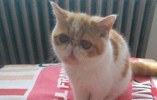 猫咪球虫病会传染人吗图片