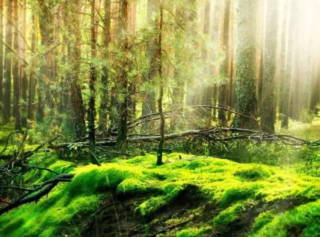 赏析: 空旷寂静的山中看不到一个人,只听得到说话的声音.