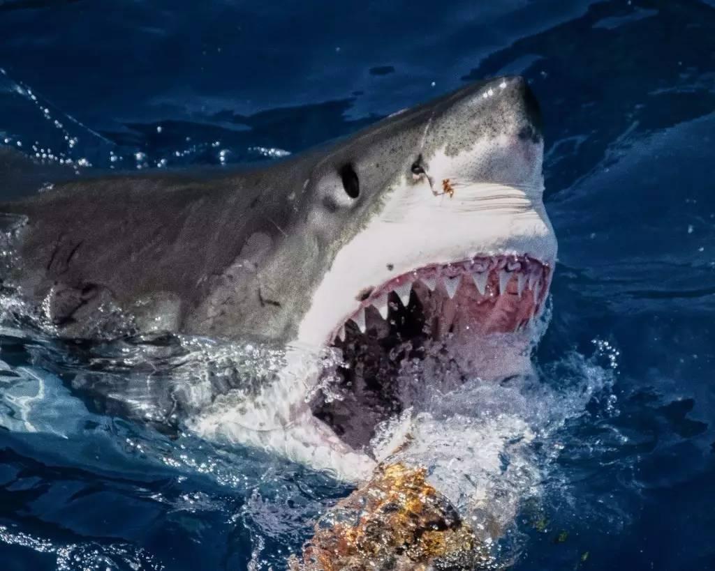 庄文展励志小故事《没有鳔的鲨鱼》