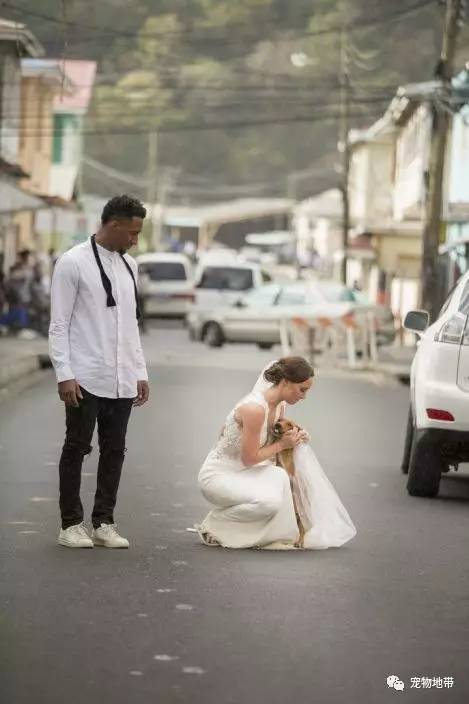 """拍婚纱照途中""""流浪狗乱入""""  他们的做法让人打呼有爱......"""