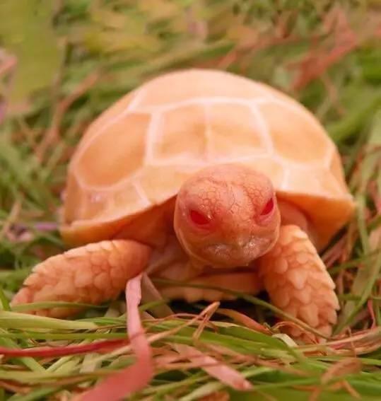 这龟似乎很邪恶