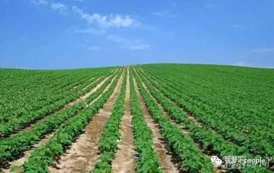 我国许可进口18种转基因农产品 农业部表示经政府批准的是安全的
