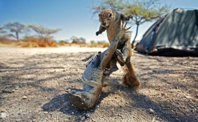 一个摄影师拍了一张精彩绝伦的猴子照片,结果被别人告到破产。。什么仇什么怨?