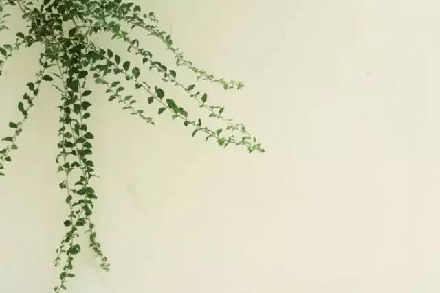 炎夏日,尽览 人间草木